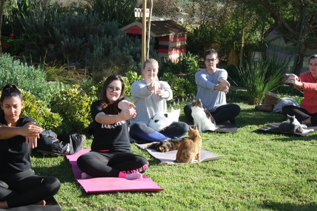 Meow down at cat yoga in Cape Town