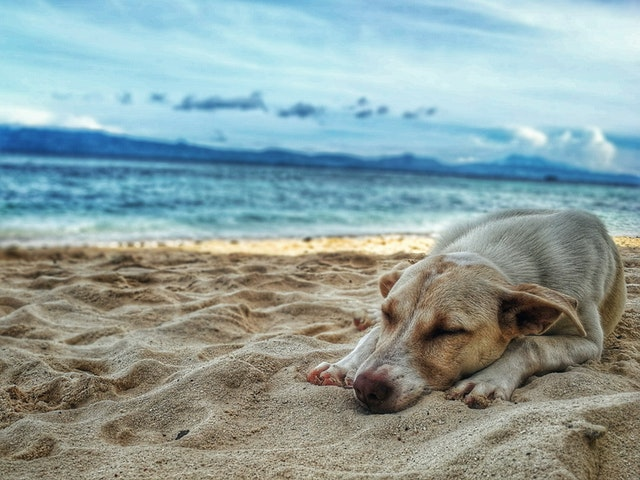 Dogs NOT banned from Cape Town beaches