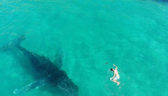 Swimmers make unexpected friend in Simon's Town
