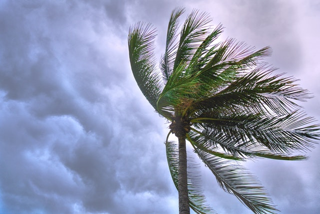 Runaway fire and gale force wind warning