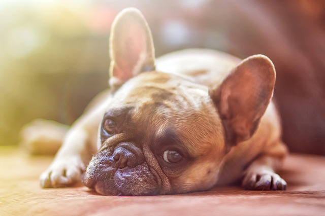Cape SPCA confirms dog theft on the rise