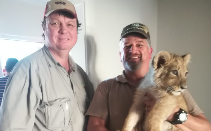 Lion cub rescued from Athlone