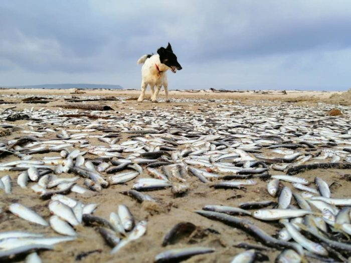 Locals puzzled by hundreds of dead fish