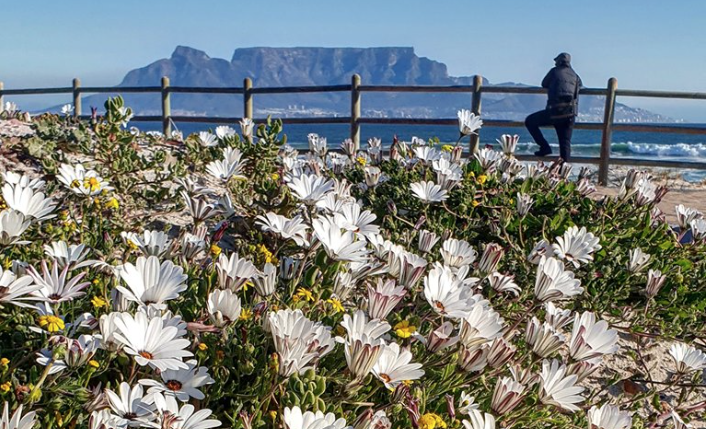 Spring has sprung in Cape Town