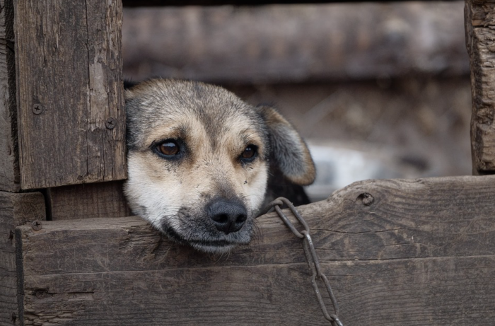 Organisation aims to unchain dogs