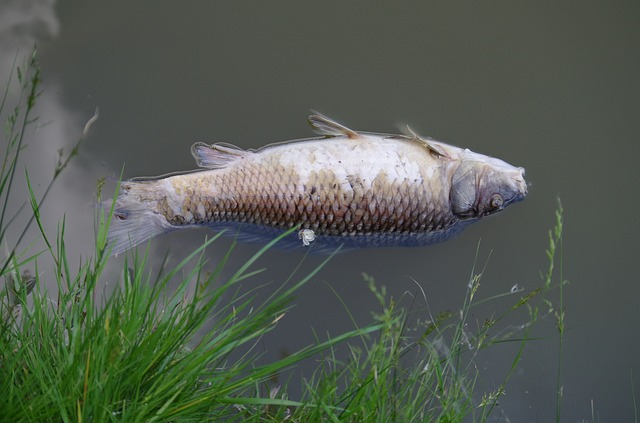 Residents advised not to eat Touws River fish