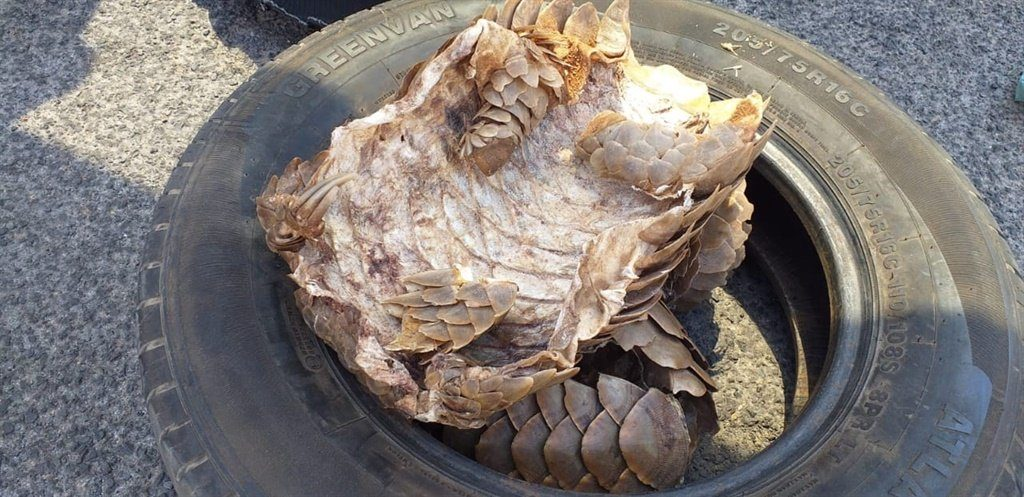 Bellville suspects arrested for pangolin body parts