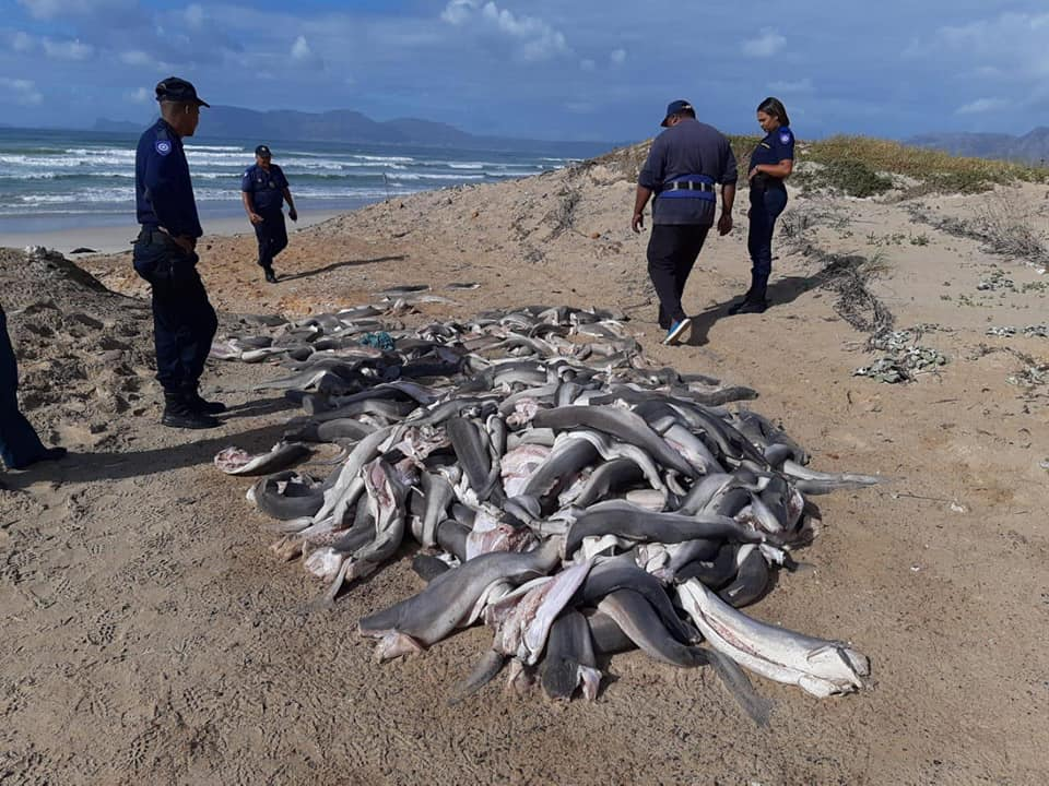 Baby shark bodies dumped at Blue Waters
