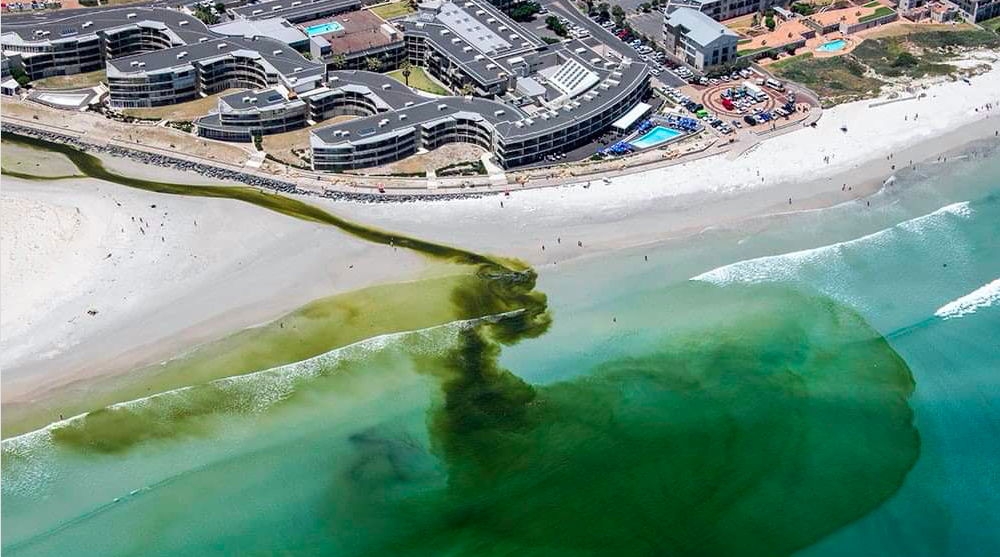 Residents outraged by toxic state of Milnerton Lagoon