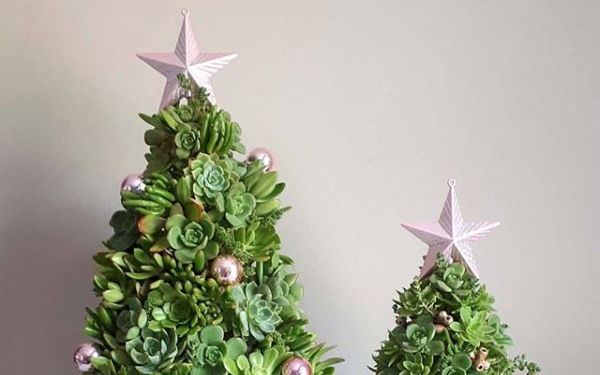 Sustainable Christmas tree alternatives