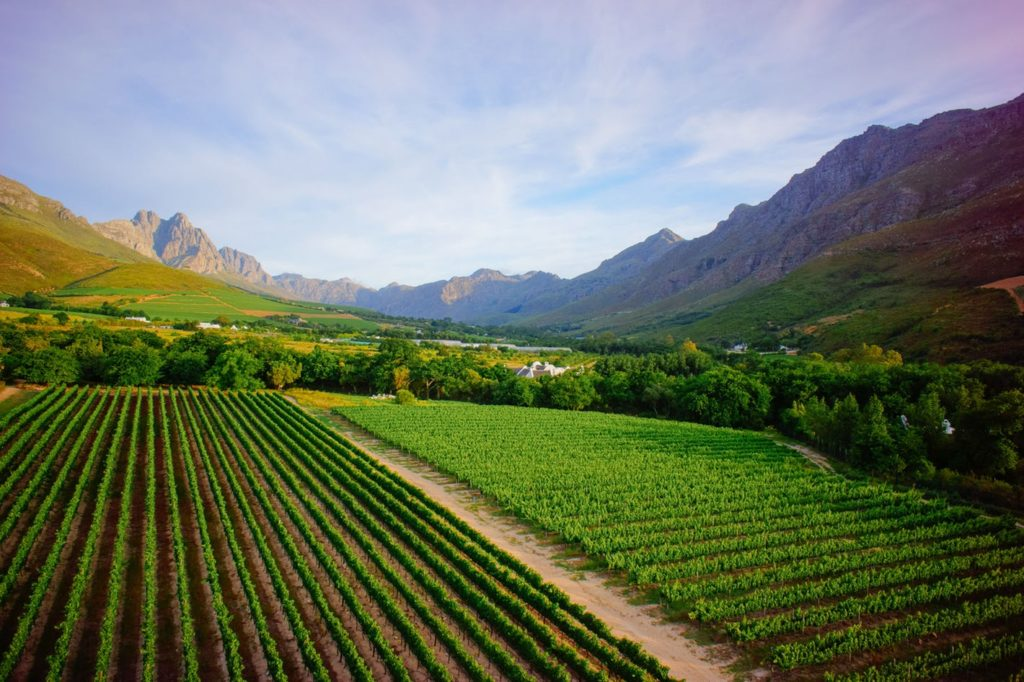 A thousand things await you in the Cape Winelands