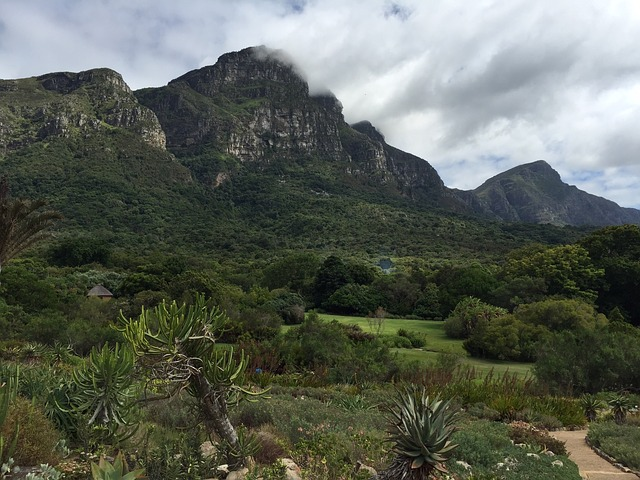 Table Mountain National Park visitor's guide