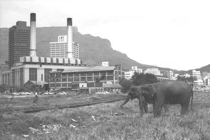 Where Cape Town's animals used to roam