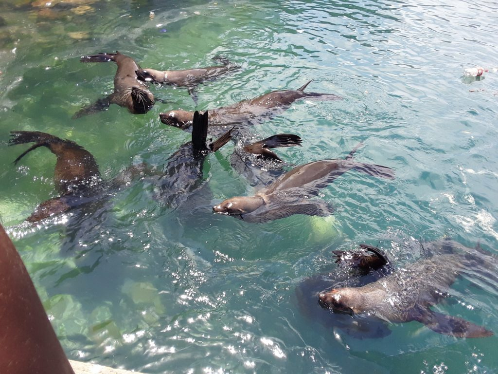 Hout Bay seals to be relocated