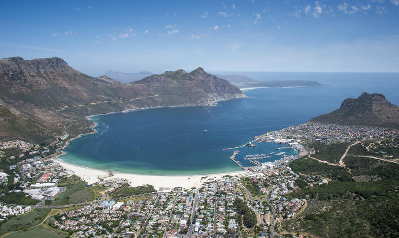 Dolphins captured on the hunt in Hout Bay