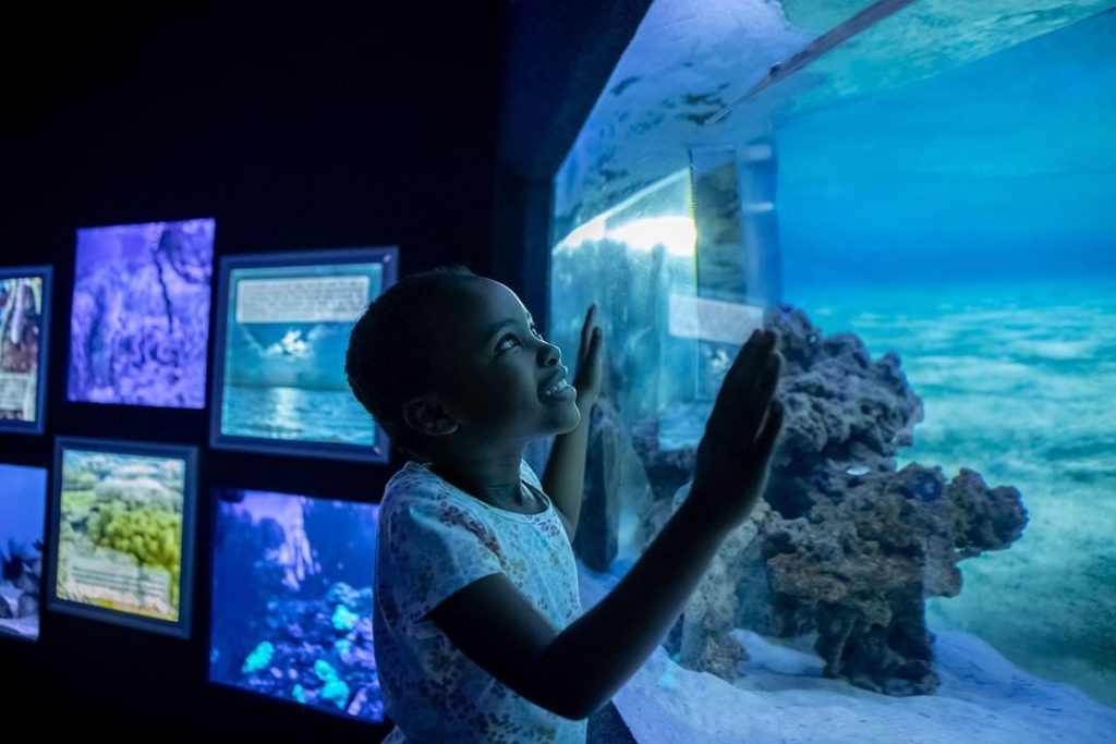Two Oceans Aquarium offers free course for Grade 7s
