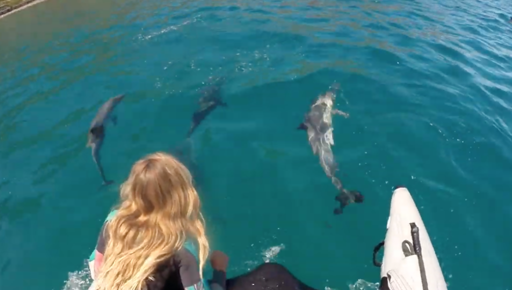 Friendly dolphins swim with paddlers in Hout Bay