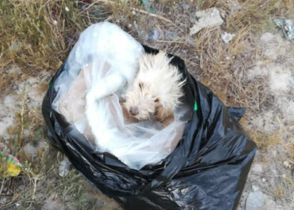 SPCA rescues abandoned dog from trash