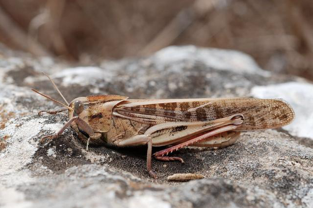 Plague of locusts swarm the Karoo