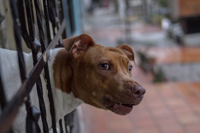 Cape sets up anti-dogfighting task force