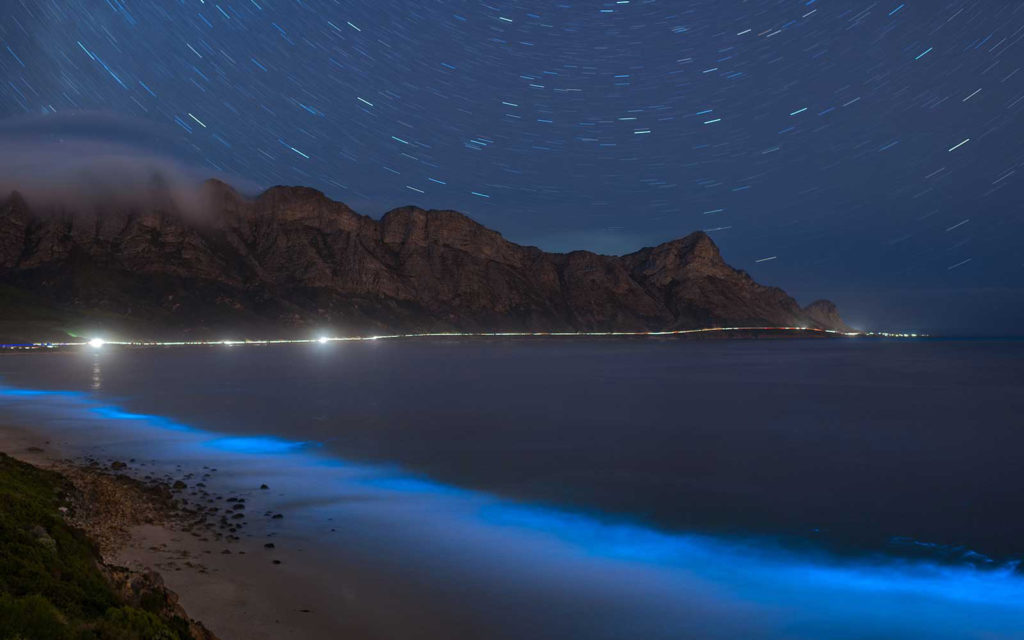 Why some Cape waters are glowing bright blue