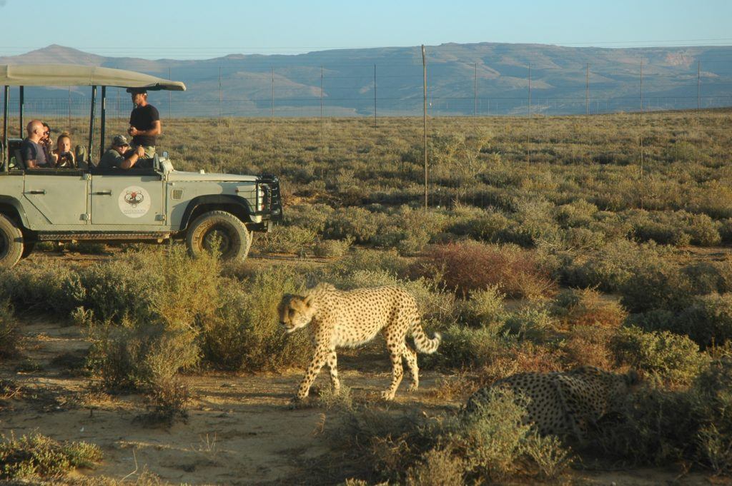 Experience the wild at Inverdoorn Private Game Reserve