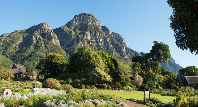 Help Cape Town keep the City Nature Challenge title