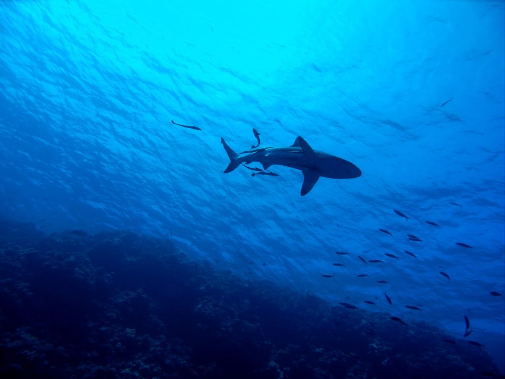 Shark nets lifted during lockdown