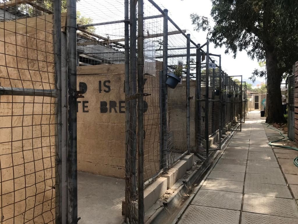 TEARS shelters empty due to foster response