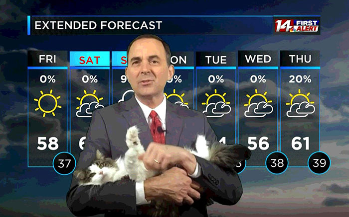 Cat interrupts work, becomes weather star