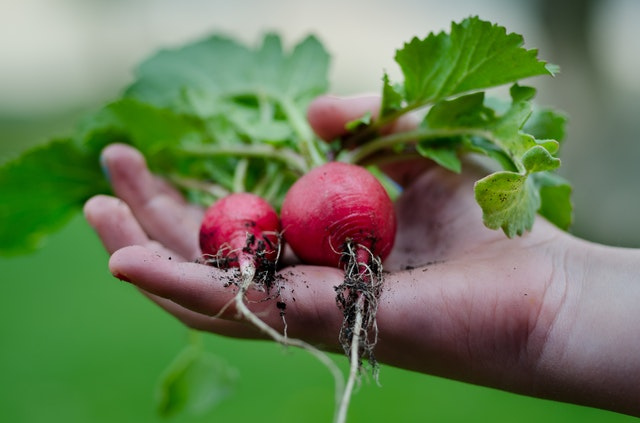 Easy edible plants to grow at home during the winter