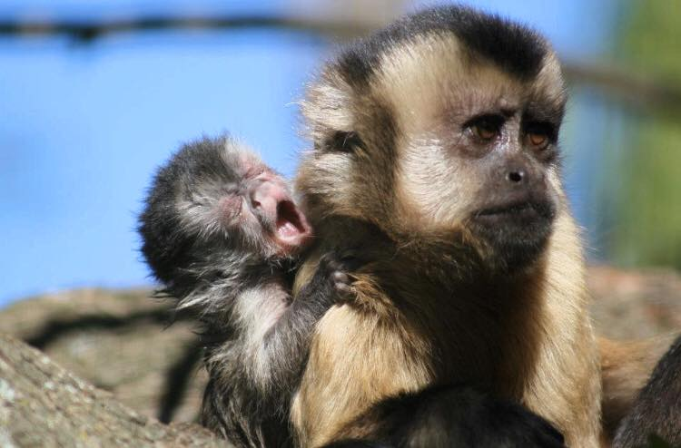 Monkey Town needs donations to stay afloat