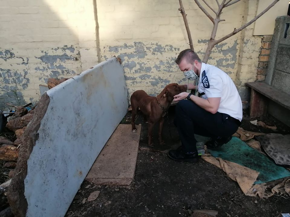 Three bust for dog fighting in Firgrove