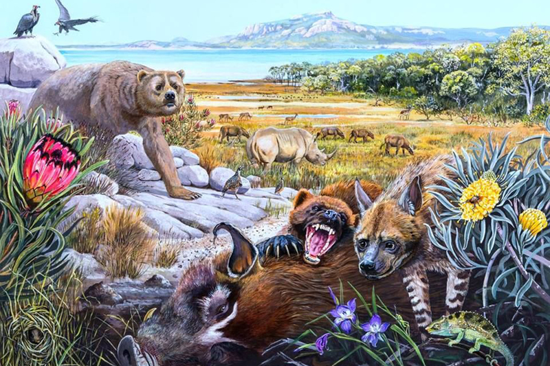 UCT scientists discover 'wolf-sized' otter remains