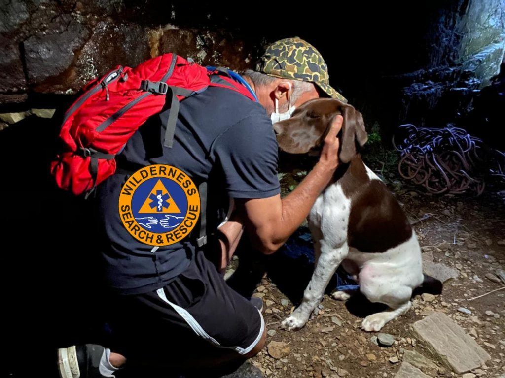Dog rescued from ravine on Table Mountain
