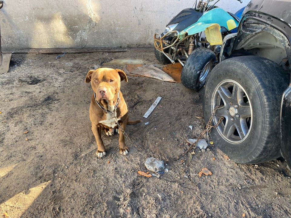 SPCA rescue 4 dogs kept on static chains from Sunbird Park property