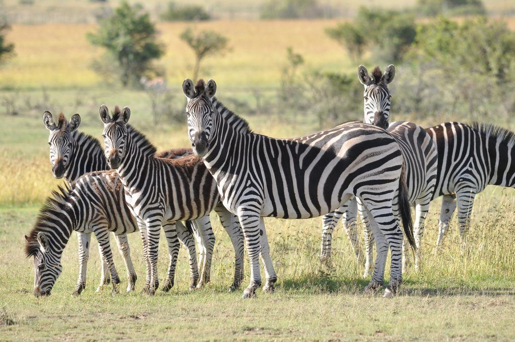 Self-drive game reserve visits permitted in Level 3