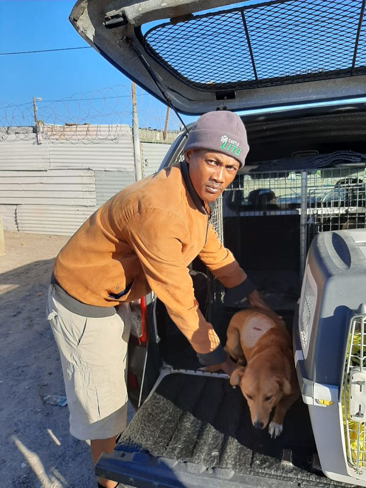 SPCA saves dog who was stabbed and left for dead