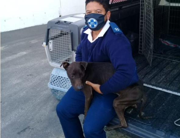 SPCA rescues puppy from horrid conditions