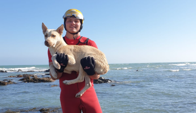 Stuck dog rescued from ocean rock