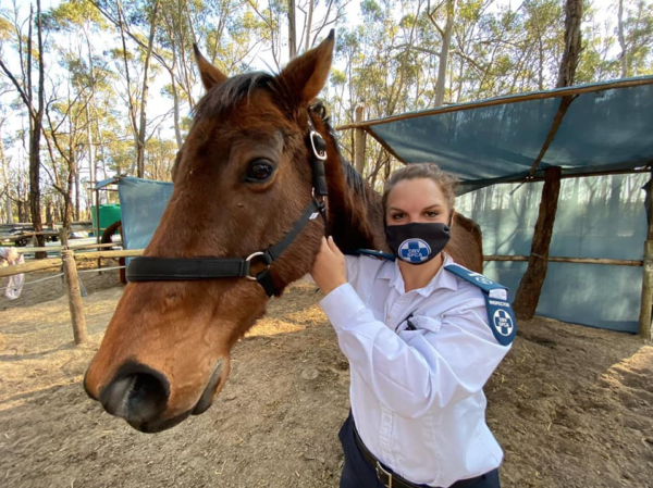 SPCA needs your help to care for these malnourished horses