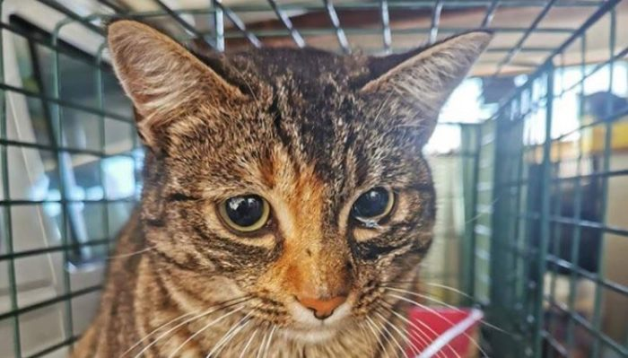 Cat secretly hitches ride from Port Elizabeth to Cape Town
