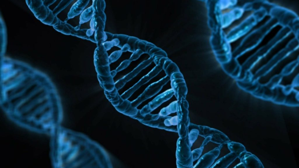 DNA linked to risk of severe COVID-19 may come from Neanderthals