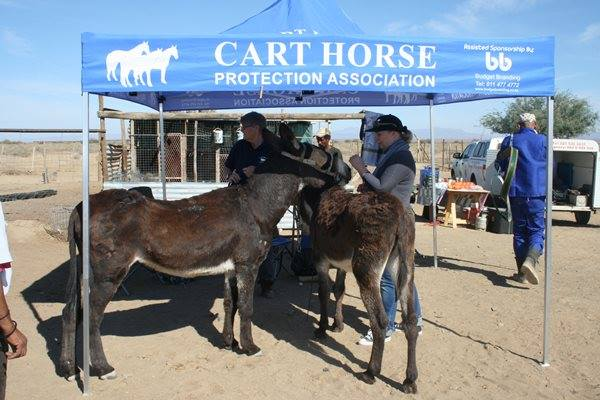 Join this virtual quiz night to raise funds for Cape Flats horses