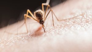 Mosquitoes do not spread COVID-19, confirms study