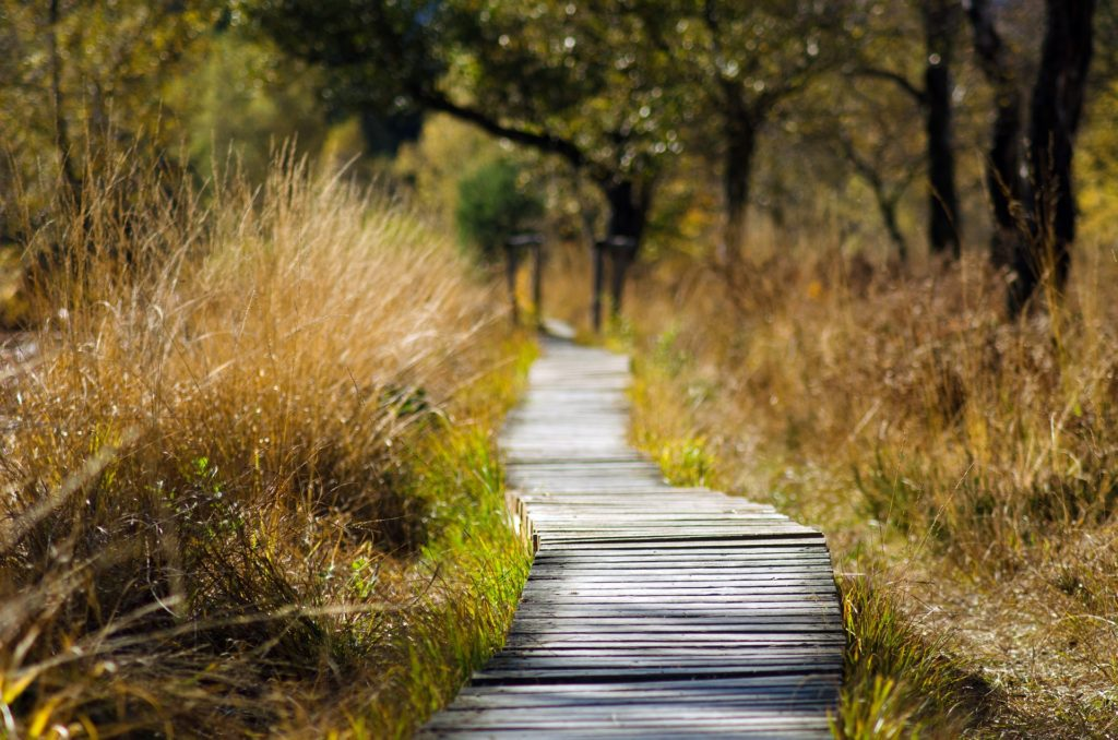 All Cape Town nature reserves open for exercise this week