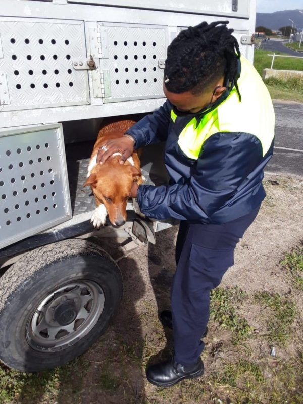 SPCA rescues trapped dog from canal