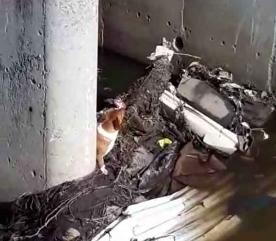 SPCA rescues dog trapped in canal