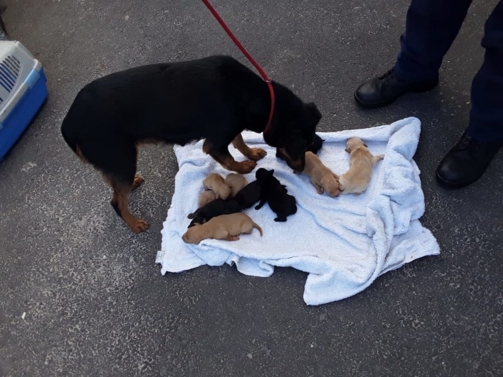 Abandoned dog and nine newborn puppies rescued from drain