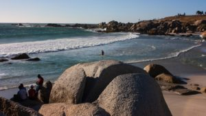 Herbicides accumulate in Camps Bay sea life